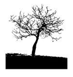 Arbre noir Photo stock