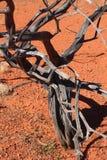 Arbre noir brûlé dans le sable rouge de l'Australien à l'intérieur images libres de droits
