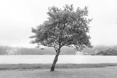 Arbre noir et blanc images stock