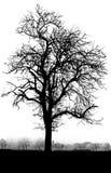 Arbre noir et blanc Photos stock