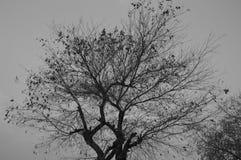Arbre noir et blanc Photo stock