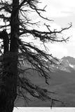 Arbre noir et blanc Image stock