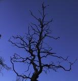 Arbre noueux de silhouette contre le ciel Photographie stock libre de droits