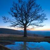 Arbre nu d'automne isolé sur la montagne de nuit Images stock