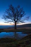 Arbre nu d'automne isolé sur le dessus de montagne de nuit Photo stock