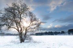 Arbre nu dans un domaine de neige avec le lever de soleil tôt Image libre de droits