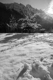 Arbre nu de paysage idyllique d'hiver couvert de neige en Julian Alps en noir et blanc, Kranjska Gora, Slovénie Image libre de droits