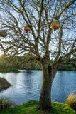 Arbre nu devant un lac bleu images libres de droits
