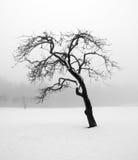 Arbre nu en hiver Image libre de droits