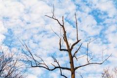 Arbre nu sec et ciel nuageux Photographie stock
