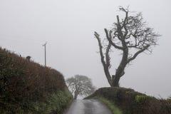 Arbre nu solitaire sur le côté d'une route rurale Image stock