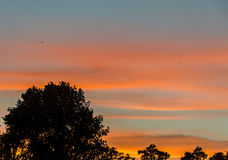 Arbre ombragé au coucher du soleil, ciel orange, fin, paysage Photos stock
