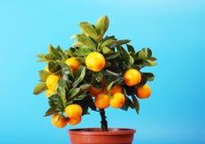 Arbre orange à la maison Photographie stock libre de droits