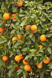 Arbre orange photo stock