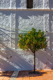Arbre orange Image libre de droits