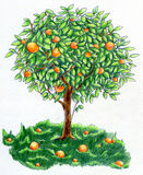 Arbre orange Illustration Stock