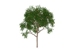 arbre orange d'isolement tropical illustration stock