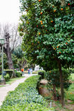 Arbre orange dans le jardin national ou le jardin royal, Images libres de droits