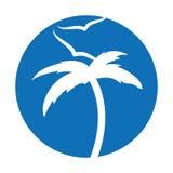 Arbre Palm Beach avec des mouettes Photos stock