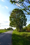Arbre par la route Photographie stock