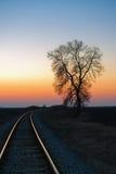 Arbre par le chemin de fer au coucher du soleil Image libre de droits