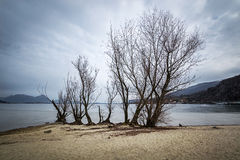 Arbre par le lac photos stock