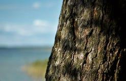 Arbre par le lac Image libre de droits