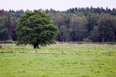 Arbre parmi l'herbe photographie stock libre de droits