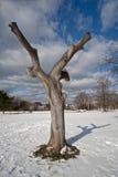 Arbre parmi la neige Photo libre de droits