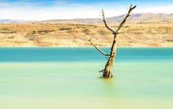 Arbre parmi le paysage rural de lac avec des roseaux, faune et avec les cieux bleus et les nuages Photo stock