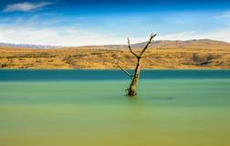 Arbre parmi le paysage rural de lac avec des roseaux, faune et avec les cieux bleus et les nuages Images stock