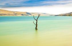 Arbre parmi le paysage rural de lac avec des roseaux, faune et avec les cieux bleus et les nuages Images libres de droits