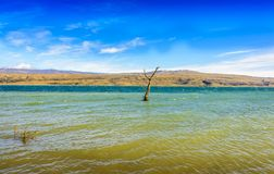 Arbre parmi le paysage rural de lac avec des roseaux, faune et avec les cieux bleus et les nuages Image stock