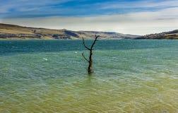 Arbre parmi le paysage rural de lac avec des roseaux, faune et avec les cieux bleus et les nuages Photographie stock libre de droits