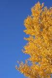Arbre pendant l'automne Photographie stock libre de droits