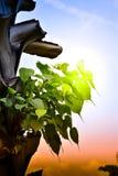 Arbre Pho de Bodhi sur le palmier photographie stock libre de droits