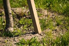 Arbre plant? avec des enjeux dans la terre photographie stock libre de droits