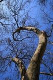 arbre plat Images libres de droits