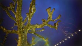 Arbre plat de sycomore contre le ciel de soirée, illumination, humeur de fête, vacances banque de vidéos