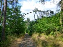 Arbre plié au-dessus du chemin forestier Photo libre de droits