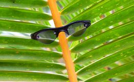 Arbre portant les lunettes foncés - relaxation et plaisir - illusion de visage photos stock