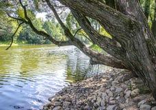 Arbre près de l'eau Photographie stock