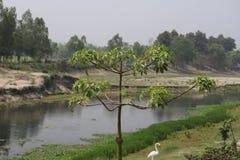 Arbre près de la rivière photos libres de droits