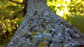 arbre proche de branchement vers le haut Image stock
