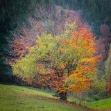 Arbre quatre-saisons Image stock
