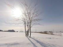 Arbre qui est dans un domaine neigeux Photographie stock
