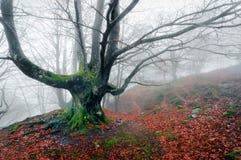 Arbre rampant dans la forêt brumeuse photo libre de droits