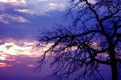 Arbre rampant de coucher du soleil image libre de droits