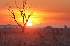 Arbre ratatiné au lever de soleil Images libres de droits