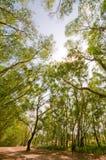 Sentier piéton rayé par arbre image stock